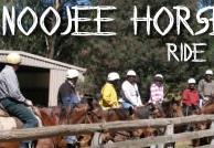 Noojee Horse Safaris