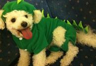 Dog Carers Australia