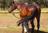 Academy Equestrian
