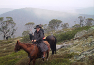 Reynella Alpine Horse Riding Safaris